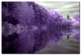 purple tree line forests nature background wallpapers on