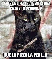 Gato Meme - c祿mo dar una pastilla a un gato memes and humor