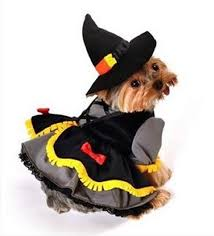 Dog Halloween Costume Ideas 23 Awesome Dog Halloween Costume Ideas Pictures Dogtime