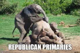 Elephant Meme - baby elephant pile latest memes imgflip