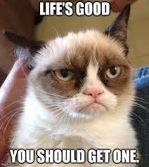 Get A Life Meme - grumpy cat get a life meme best cat ever pinterest grumpy