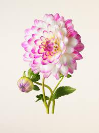 Beautiful Flowers Image Kenji Toma U0027s Tribute To The Most Beautiful Flowers Spoon U0026 Tamago