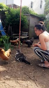Benefits Of Backyard Chickens by A City Of Chickens The Epa Blog