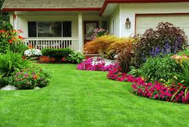 Garden Shrubs Ideas Simple Shrubs And Bushes For Landscaping Pictures Design Ideas