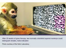 Medicine For Color Blindness Color Vision Discovery Spurs Clamor And Clinic Consult Uw Medicine