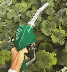 berkeley u0027s biofuel oasis sells alternative fuel but also a diy