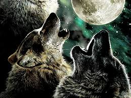 call of the wolf and moon spirits by greg storey dribbble