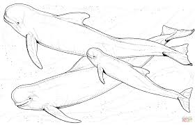 download coloring pages whale coloring pages whale coloring