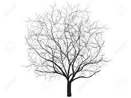 white tree dead tree silhouette vector oak crown without leafs