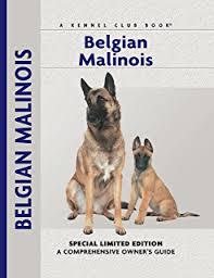 belgian sheepdog training guide belgian malinois and belgian shepherd belgian malinois and