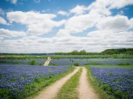 we love how wildflowers paint the texas landscape southern living
