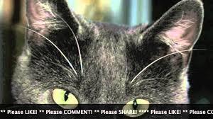 man kicks cat video update king the cat safe at aspca andre