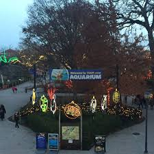 Toledo Zoo Christmas Lights by Being Mommy With Style Toledo Zoo For Kids