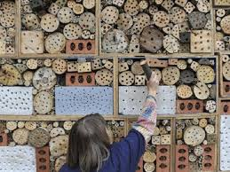 How To Find Ladybugs In Your Backyard Insect Hotel U2022 Nifty Homestead