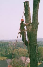 treeserviceofnashville commercial and residential tree