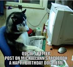 Birthday Dog Meme - disapproving dog memes quickmeme