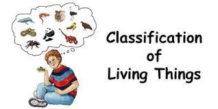classification unit mrs lp u0027s 7th grade science page