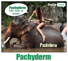 Elephant Meme - elephant memes dailyvocab english hindi meaning pictures