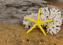 wedding decor yellow starfish painted starfish