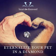 turn ashes into diamond memorialize your pet forever in a diamond animal bliss