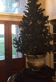 dingy white tree tree spray painted black hometalk