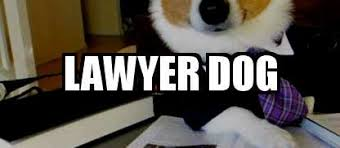 Lawyer Cat Meme - the meme blog meme explorer