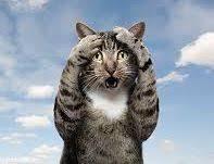 Omg Cat Meme - omg cat blank template imgflip
