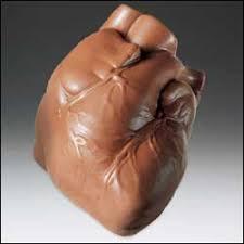 heart chocolate chocolate human heart 1lb anatomically correct