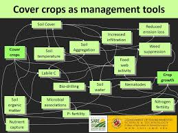 cover crops prevent erosion no till vegetables harnessing the