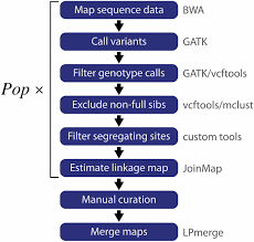 Linkage Map High Resolution Linkage Map And Chromosome Scale Genome Assembly