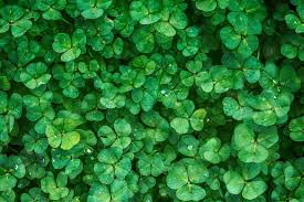 really go green for st patricks day with eco friendly activities