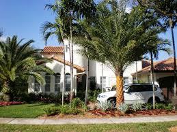 modern tropical landscape design blaum landscaping