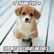 Thank You Birthday Meme - you for my birthday wishes puppy