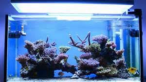 Aquascape Reef Aquascape Reef Tank Hobbyist Of Ornamental Fish