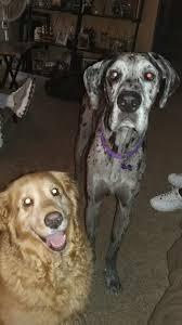 pet slideshow may 2017 wnep com