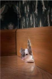How Do You Get Rid Of Mold In A Basement by How To Get Rid Of Mice In Walls Victor