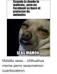 Memes De Chihuahua - cuando tu dueno te maltratapero en facebook se hace el protector de