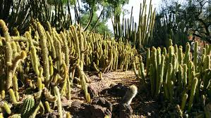 Botanical Gardens Huntington File Cacti Mound At Huntington Library Collections And