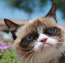 Frown Cat Meme - my 35 favorite grumpy cat memes