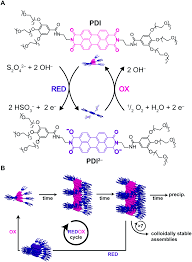 non equilibrium supramolecular polymerization chemical society