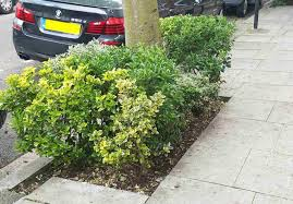 guide to planting tree bases lbhf