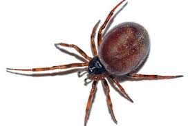 Are Spiders Attracted To Light The Best Ways To Get Rid Of Spiders And Keep Them Away From Your