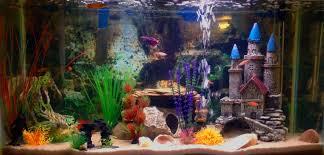 kates fish kates aquarium