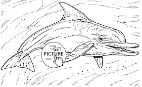 cute dolphin animal coloring page for kids animal coloring pages