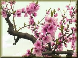 blossom branch sleeve idea board thing