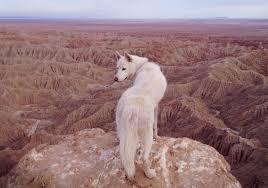 anza borrego desert anza borrego desert ca february 2014looking out over the