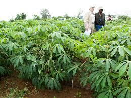 Tropical Plants Pictures - plant lab tropical plant biotechnology