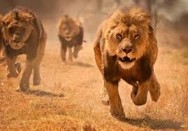 image how prophet daniel abodunrin was killed eaten by lions at