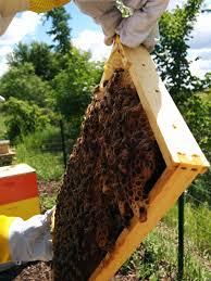 free little giant guide to beekeeping u0026 honey miller