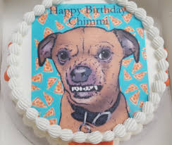 birthday cake for dogs san diego s 1st dog bakery paw pleasers